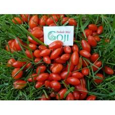 Pachet 50 plante Goji 60 - 80 cm