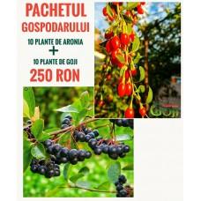 Oferta 10 plante Aronia si 10 plante Goji